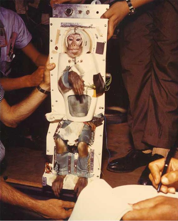 Macaque en préparation d'un voyage en aller simple pour la planète Mars